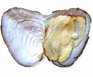 Pearl Oyster | Oyster Pendants | Pearl Oyster Pendant