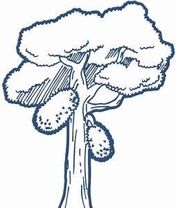 Jackfruit Tree Drawing Road Tree Clipart #bdlZKH - Clipart Kid