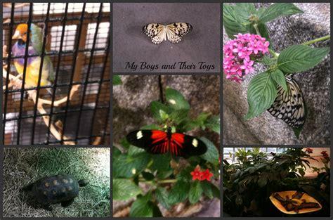 audubon butterfly garden and insectarium nola s audubon butterfly garden and insectarium my boys