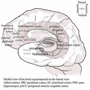 Psychotherapy  U0026 Neuroscience  U00bb Illustration