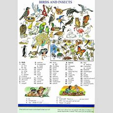 114  Birds And Insects  Picture Dictionary  English Study, Explanations, Free Exercises