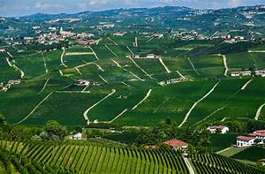 Pinot Noir Vintage Chart Why You Should Be Worried About Piemonte Nebbiolo Wine