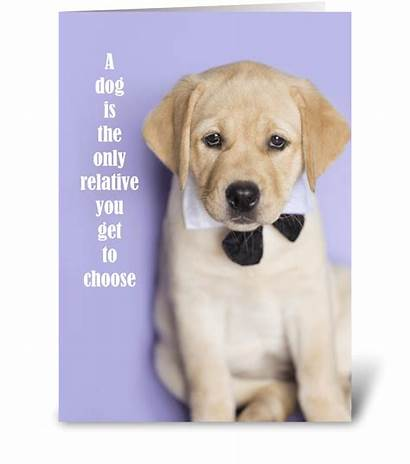 Funny Yellow Lab Cards Card Greeting Relative