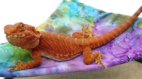 carolina designer dragons mini hammock  bearded dragons