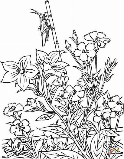 Grasshopper Coloring Pages Garden Printable Paper