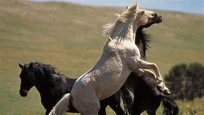 Horse Cloud Wild Stallion Nature Rockies Horses