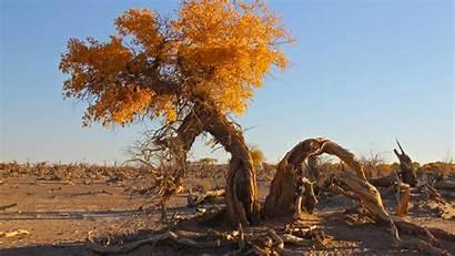 Desert Trees Landscape Desktop Backgrounds Wallpapers Wallup
