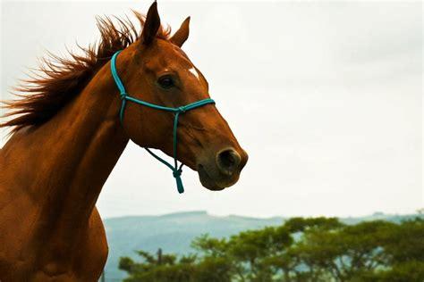 horses desteni farm social equality animals horse