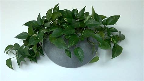 Wall Sconces For Plants sconces indoor home decoration club