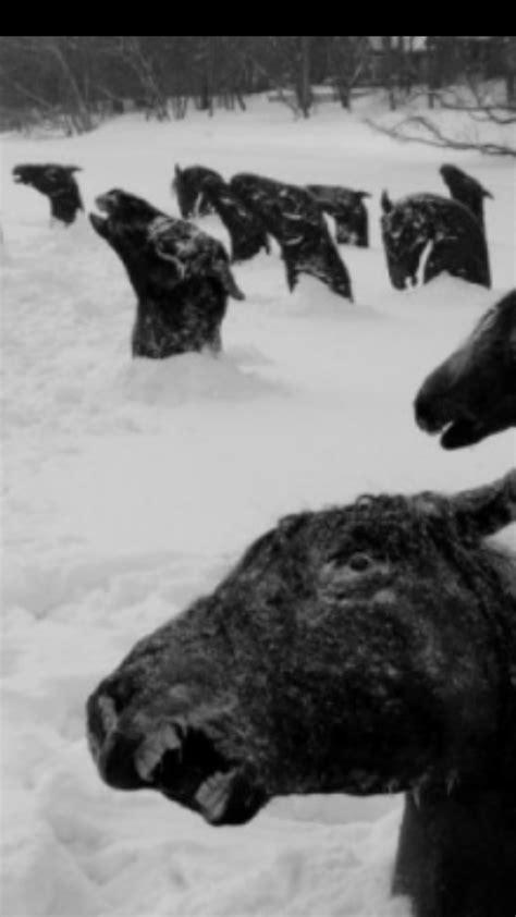 dead horses frozen   snow creepy