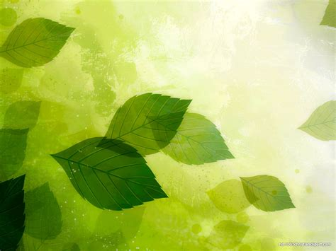 hdr green leaves background hd  backgrounds
