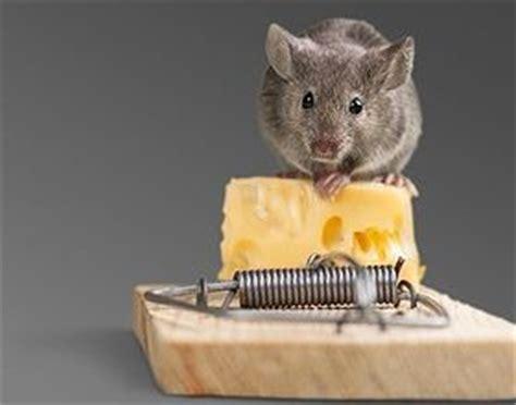 hilft gegen ratten im garten ratten im garten  tun