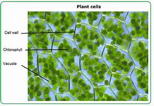 14  Cell Structure