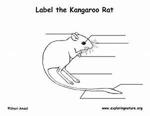 Kangaroo Rat Labeling Page
