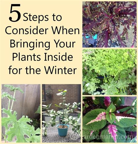when to bring plants inside bringing plants indoors for the winter
