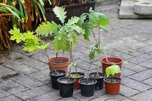 Pflanzen Im Treppenhaus : endlich fr hling pflanzen raus r ckschnitt majas pflanzenblog ~ Orissabook.com Haus und Dekorationen