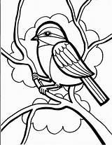 Coloring Porcupine Sheets Birds Advertisement sketch template