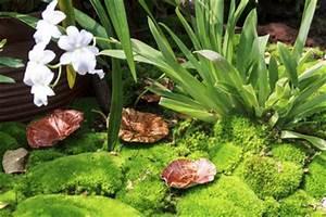 Asche Gut Für Pflanzen : ist moos gut f r pflanzen ~ Markanthonyermac.com Haus und Dekorationen