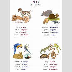 Free Animals Worksheets!  Printable Spanish