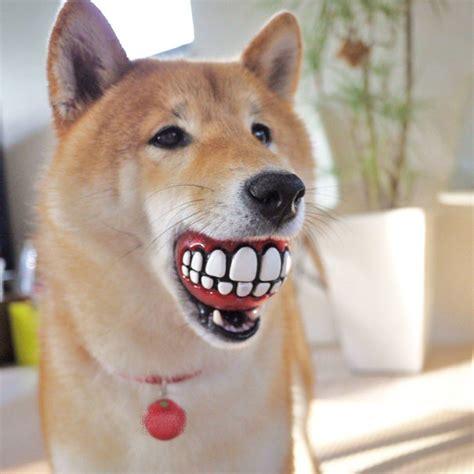 canapé pour grand chien 20 idées de cadeaux originaux pour chien 2tout2rien