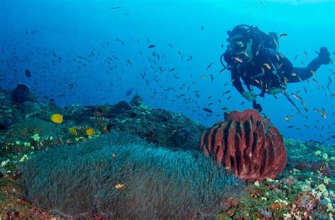 lets dive  diving info