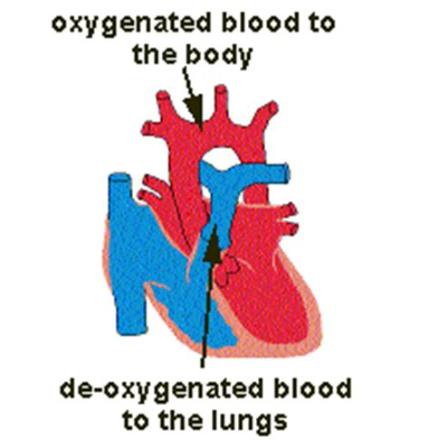 what color is deoxygenated blood oxygenated blood signwiki