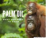 Images of About Palm Oil