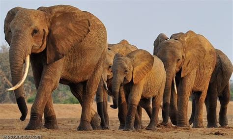 photographing gentle giants africa geographic