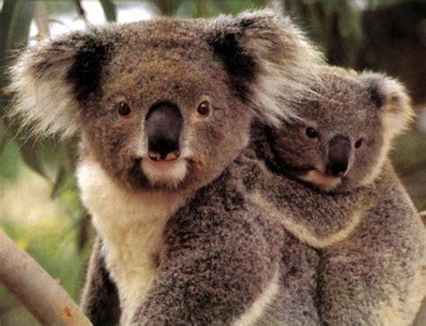 169 Best Endangered Animals Images On Pinterest