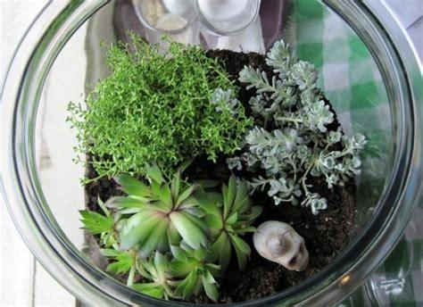 diy terrarium     plants   life