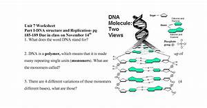 25 Section 112 From Dna To Protein Worksheet Answers