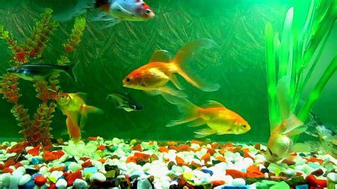 Animated Wallpaper Fish Aquarium - 50 best aquarium backgrounds free premium templates