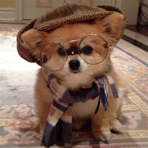 insanely cute dog    beckerman blog