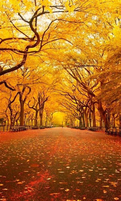 Fall Desktop Backgrounds New York by Central Park Fall Wallpaper Wallpapersafari