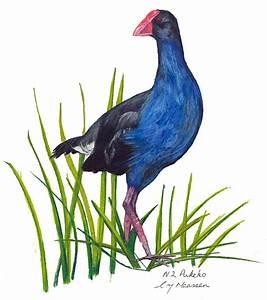 Nz Native Pukeko Bird Drawing by Christina Maassen