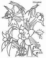 Columbine Flower Coloring Flowers Pages Drawing Drawings Easy February Template Books Spring Qisforquilter Quilter Adult Sketch Sheets Brod Fritzi Sketches sketch template