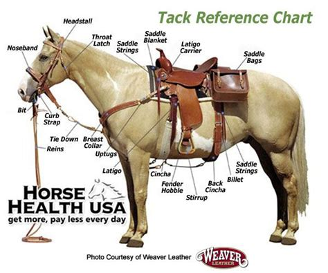 horse tack western riding horses proper placement stuff anatomy reference saddle quick saddles gear easy tips equipment charts equine things