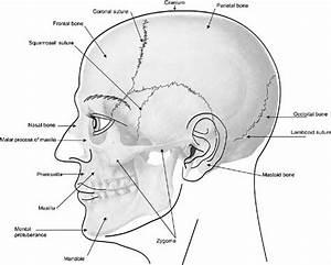 Elements Of Morphology  Human Malformation Terminology