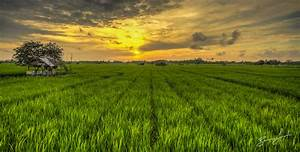 Daily Photo – Rice Field Runway | Bruce Levick ...