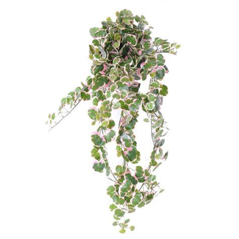plante verte d int 233 rieur tombante prix achat vente en ligne