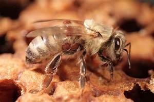 Mittel Gegen Bienen : neues mittel gegen bienensch dling science ~ Frokenaadalensverden.com Haus und Dekorationen