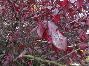 Baum Mit Roten Blättern : all about make up blogparade herbst herbst beauty 2013 herbst herbst es herbstet so ~ Eleganceandgraceweddings.com Haus und Dekorationen