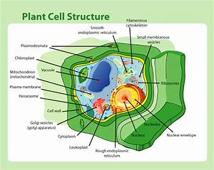 Cells, Photosynthesis & Respiration - Mr. Rott's Science Room