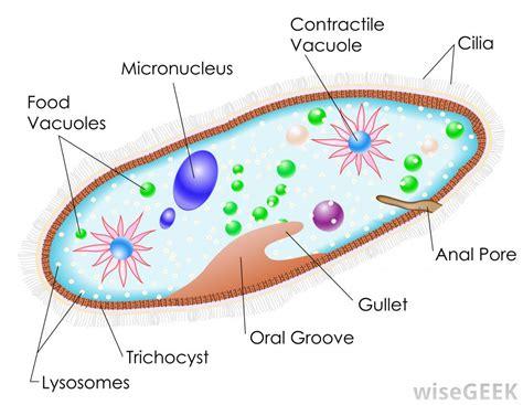 Single celled prokaryotes all organisms are The Six