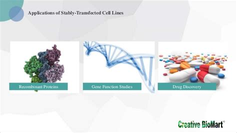 protocol  stable cell  generation