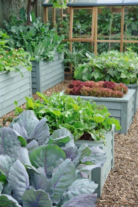 Vegetable Garden With Fantastic Raised Beds Huerta