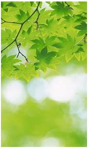 Best Greenery desktop wallpapers background collection ...