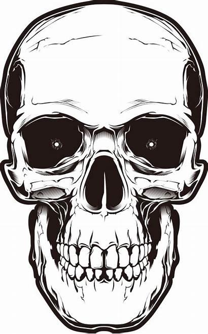 Skull Transparent Background Skulls Bone Clipart Drawing