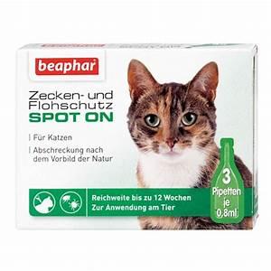 Malzpaste Für Katzen : beaphar zecken flohschutz spot on f r katzen bei zooroyal ~ Orissabook.com Haus und Dekorationen