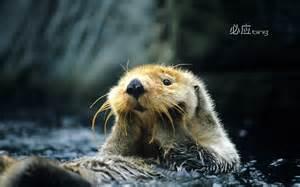 Animals Bing Images as Desktop